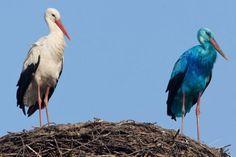 Der blaue Storch von Biegen