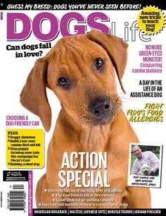 Free Dog Grooming Magazines Uk