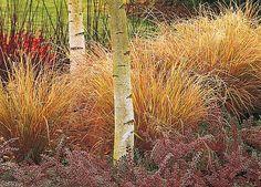 obrázek z archivu ireceptar.cz Winter Garden, Magick, Outdoor Gardens, Fall Winter, Plants, Gardens, Lawn And Garden, Witchcraft, Plant