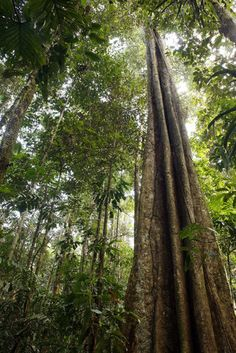 New research to help understand role of Amazon forests in Global Carbon Cycle.