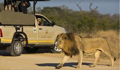These specialists go above and beyond to organize the ultimate African safari tour. Travel + Leisure's readers name the best safaris in Africa. Plan your next adventure travel in Africa. African Wild Dog, African Safari, Kruger National Park Safari, National Parks, South African Holidays, River Lodge, Wildlife Safari, Canoe Trip, Wild Dogs
