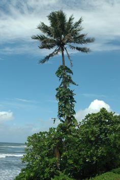 Papeete Tahiti