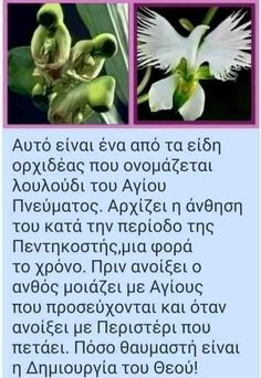 Byzantine Icons, Jesus Christ, God, Reading, Quotes, Plants, Flowers, Dios, Quotations
