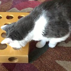 Here's Marty trying out his new puzzle toy.....just can't quite reach the ball inside!