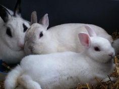 konijntjes lekker warm bij elkaar