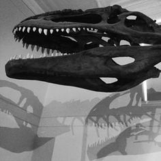 Australian Museum | 32 Sydney Outings For Less Than $15