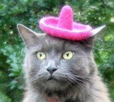 @Terri gato con sombrero-para viernes y sabado?????