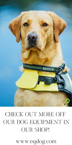 Check out our online shop for more outstanding dog equipment! Walking Equipment, Dog Walking, New Toys, Dog Owners, Your Dog, Labrador Retriever, Lovers, Gift Ideas, Check