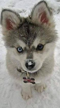 Cute Wild Animals, Baby Animals Pictures, Cute Little Animals, Cute Animal Pictures, Cute Funny Animals, Animals Beautiful, Cute Cats, Cute Dogs And Cats, Adorable Baby Animals