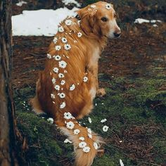 The Versatile Golden Retriever - Champion Dogs Cute Baby Animals, Animals And Pets, Funny Animals, Cute Dogs And Puppies, I Love Dogs, Doggies, Adorable Puppies, Dog Zodiac, Zodiac Traits