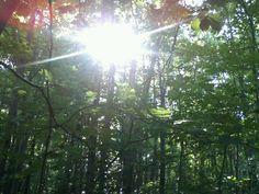 """La belleza del sol entre los àrboles. """"    The beauty of the Sun among the trees."""