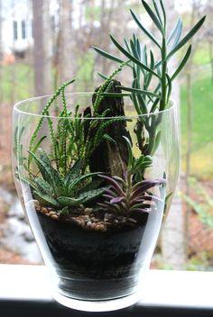 Your Jade Forrest Terrarium - Succulent Terrarium