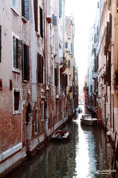 Roses among the stones. Stage Communication, Pictures Of Venice, Coaching, Photos, Roses, Couple, Stone, Colors, Venice
