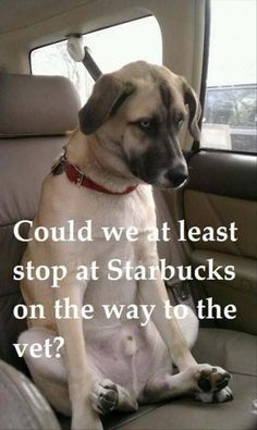 What every dog needs before going to the vet. http://www.pleated-jeans.com/2015/05/22/funny-pic-dump-5-22-15/?utm_content=bufferffc28&utm_medium=social&utm_source=pinterest.com&utm_campaign=buffer#more-126722