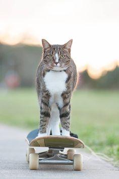 Didga o gato skatista. - Clube do skate