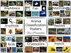 Animal Classification Posters and Games - Free Printables