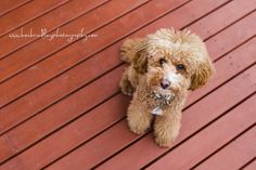 Pet Photography   Bec Brindley Photography
