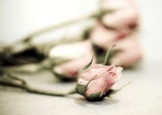 Aside photographic print of bouquet of pink roses by JoannasFoto, $15.00