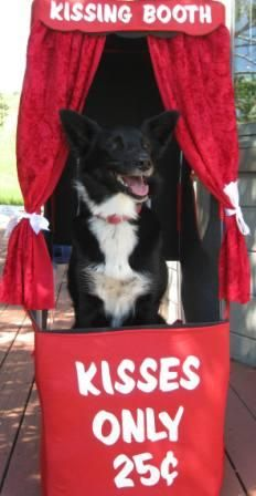 Lilly, the canine heroine from award-winning dog blog Champion of My Heart, in her kissing booth.