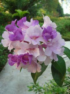 The Garlic Vine | Gardening with Wilson