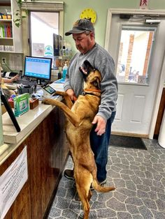 K9 Rebecca wants to know if she can add a bag of treats to the order. LOL Malinois Puppies For Sale, Belgian Malinois Puppies, Wolfsbane, Dogs For Sale, Lol, Treats, Writing, Animals, Sweet Like Candy