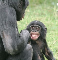 Happy little chimpanzee with his mother