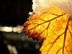 gold leaf by ~LiLa-fLies on deviantART
