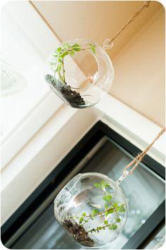Mini Hanging Mint Garden, using a tea light hanger! Hanging Herbs, Hanging Terrarium, Garden Terrarium, Diy Hanging, Hanging Gardens, Hanging Planters, Indoor Garden, Indoor Plants, Outdoor Gardens