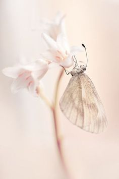 Soft and delicate...
