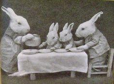 bunny dinner
