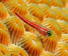 Cool Little Fish, Cool, Fish, Little, Picture
