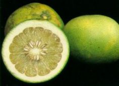 The pomelo is an exotic large citrus fruit that is an ancient ancestor of the common grapefruit.