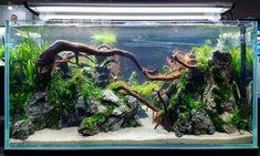 Aquascaping contest at CIPS Exhibition in Guangzhou, China. Betta Fish Tank, Aquarium Fish Tank, Planted Aquarium, Aquarium Aquascape, Vivarium, Paludarium, Cool Fish Tanks, Tropical Fish Tanks, Aquarium Landscape