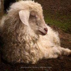 Apifera Farm: where animals and art collide. Home to Katherine Dunn/artist
