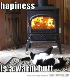 Oh to be a cat.