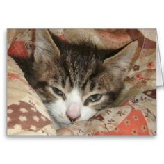Sleepy Kitty Greeting Cards! #cute #kitten #zazzle #store #cat #meow #customize #gift #present http://www.zazzle.com/conquestkitty*