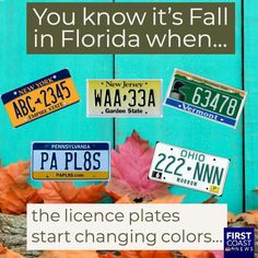 You know it's Fall in Florida when. Florida Funny, Florida Humor, Real Estate Memes, Fall Is Coming, Visit Florida, Mountain States, Sunshine State, West Palm Beach, New Jersey