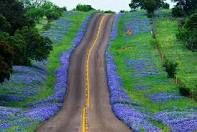 hill country roads lined in bluebonnets is something we wait for all year...