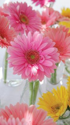 daisies....