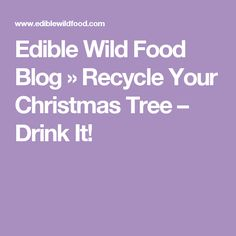 Edible Wild Food Blog   » Recycle Your Christmas Tree – Drink It!