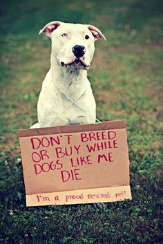 Please rescue or adopt. Pitties are fantastic dogs when raised with love and kindness. If you're a jerk and just want the dog to make you look tough, DON'T get one!