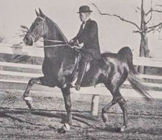 FLIRTATION WALK - DAM OF WIING COMMANDER by King's Genius and out of Spelling Bee