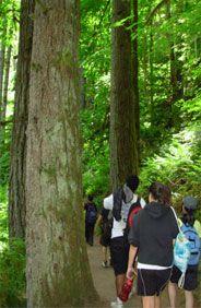 tree farms; park; open to public; hiking; trails; pet friendly; cabin rentals; scout activites; outdoor education