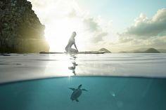 Photographer DANA NEIBERT - Paddleboard With Turtle - PictureOfTheDay - ONE EYELAND  2014-07-31