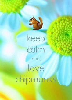keep calm and love chipmunks / created with Keep Calm and Carry On for iOS #keepcalm #chipmunks