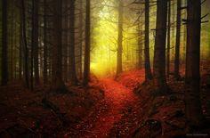 forest-wood-wald-fog-nebel-22.jpg