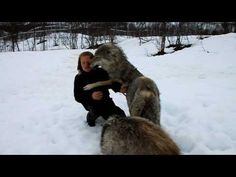 Wolves Are Happy To See The Girl