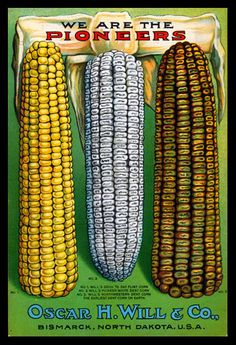 1917 Will's Seed Company Catalog Back Cover. Mandan corn varieties are the genetic ancestors of Dakota white flint, Gehu yellow flint, Burleigh County mixed, and Falconer corn varieties.