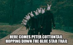 9 out of 10 bunnies agree, Blue Star Ointment is the best at treating post-Easter dry skin and fungal infections often associated with excessive hopping around town.  Ask for it by name! www.BlueStarOintment.com