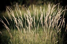 'Summer-Grass' von Roland Hemmpel bei artflakes.com als Poster oder Kunstdruck $16.63